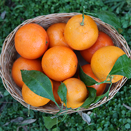 Import of Fresh Orange to Oman by Albadayar
