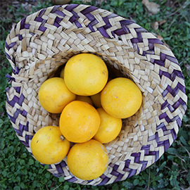 Import of Fresh Sweet Lemon to Oman by Albadayar